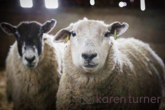 lister's farm shop 2nd 2016-232