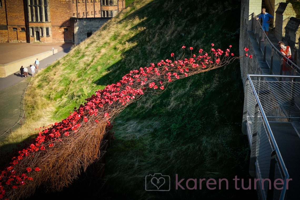 lincoln-poppies-2016-34
