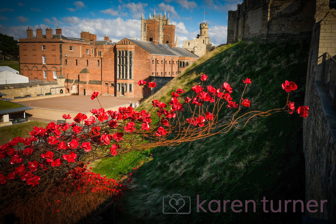 lincoln-poppies-2016-37